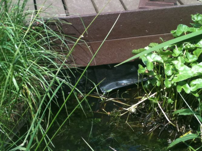 Exposing the pond liner to sunlight can eventually cause damage